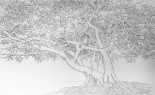 LW Park tree